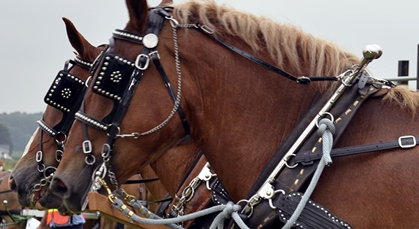 stitchnhitch600x330 driving harness, driving lines, horse harness, buggy & work harness