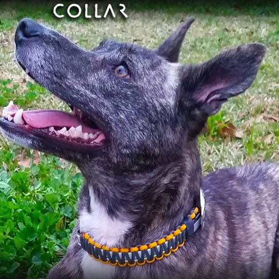 Image of a survival collar from Wazoo. Wazoo makes DIY dog collars for pet owners.