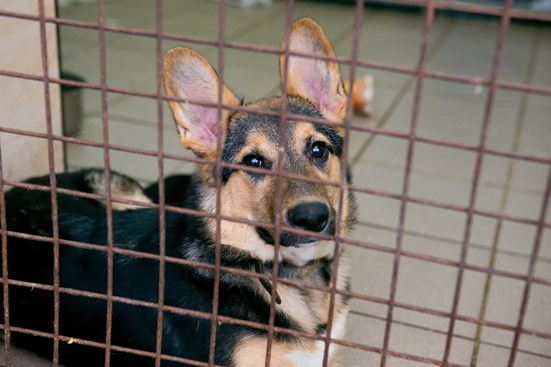 Image of a shelter dog. BioThane started Rescue by BioThane to provide shelter dogs with premium dog collars.