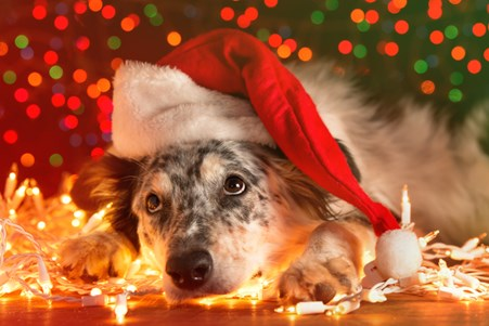 Image of a dog during the holidays. Learn about gift ideas for dogs.