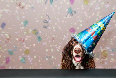 Image of a dog during New Year's Eve. Read our post on resolutions for dog owners.