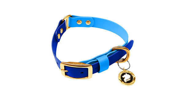 Mutt Pack Two Tone Blue Collar